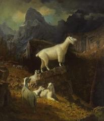 Albert Bierstadt - Rocky Mountain Goats